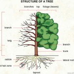 002 Structure of a tree