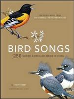 Amazon lanza libros Kindle enriquecidos con vídeo y audio, compatibles con iPhone y iPad